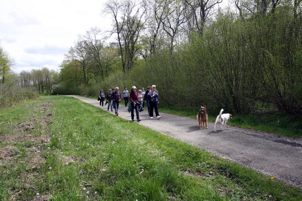 Marche avec les chiens