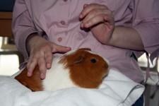 Zoothérapie à la MAS
